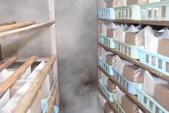 約100℃の窯で約12時間蒸して殺菌