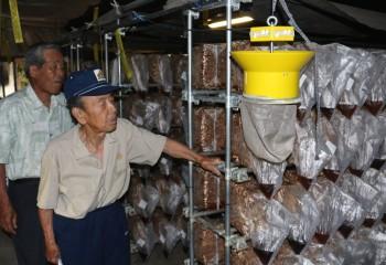 ハウス内の菌床を確認する生産者らHP