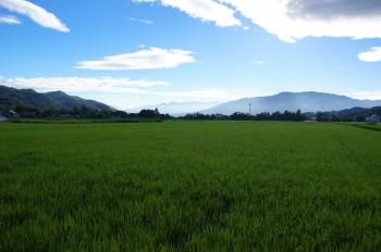 太田地区の田園