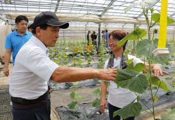 抑制栽培の管理状況を確認する部会員ら ヨコHP