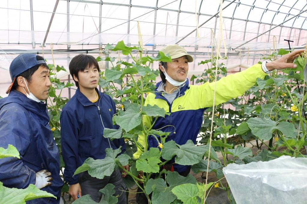 栽培状況を確認する部会員や種苗会社職員ら ヨコHP