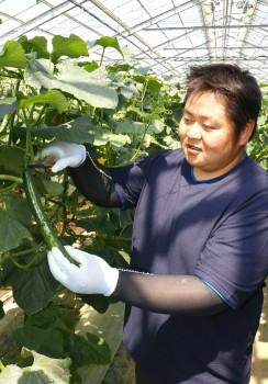 「秩父きゅうり」の収穫をする守屋聡さんHP