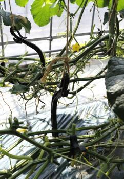 大きめのフックで下部の枝を吊るす工夫