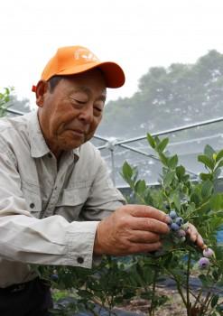 ブルーベリーの収穫をする岸重義さんHP