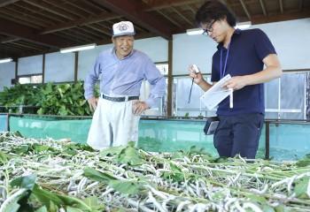 蚕の成育状況を確認する生産者とNOSA埼玉職員HP