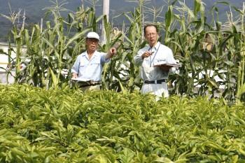 栽培圃場を確認する審査員ら ヨコ1HP