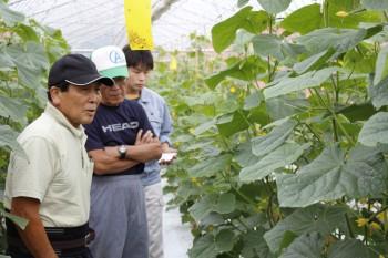 抑制栽培の管理状況を確認する部会員ら HP