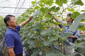 抑制栽培の管理状況を確認する部会員らHP