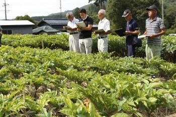 栽培圃場を確認する審査員ら ヨコ2HP